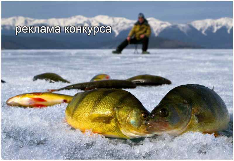 тонар рыбалка