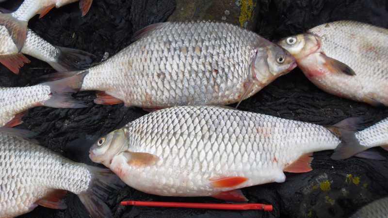 где в херсоне можно ловить рыбу